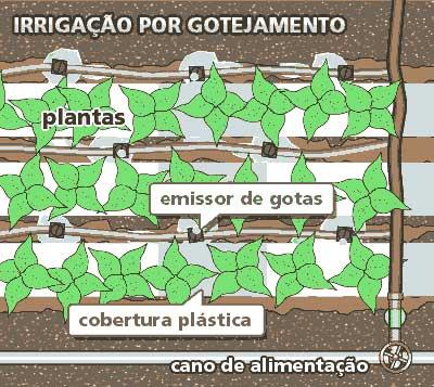 Irrigação por gotejamento