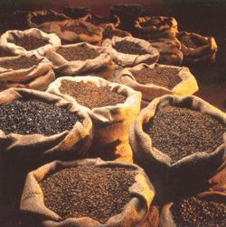 Como Aumentar a Produtividade do Cultivo de Café