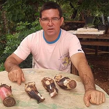Como Fazer Mudas de Banana e Plantar